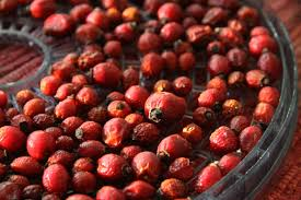 the health benefits of rose hips